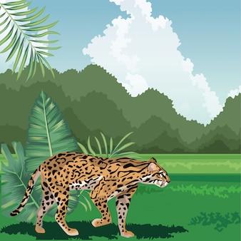 Leopard walking grass foliage tropical fauna and flora landscape