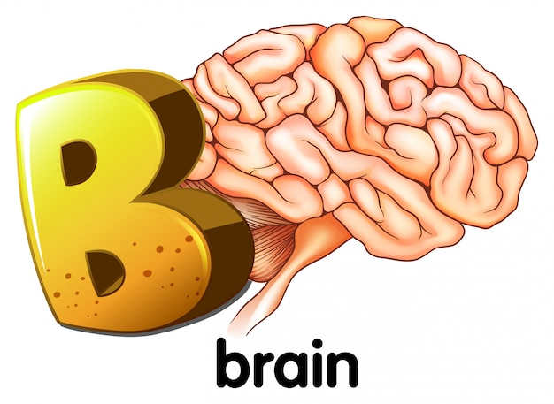 A letter b for brain