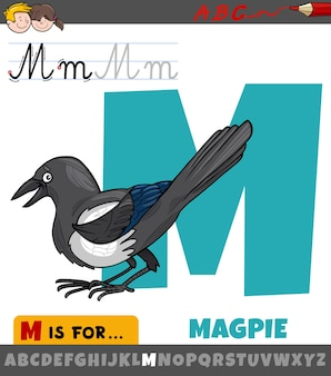 Letter m from alphabet with cartoon magpie animal character