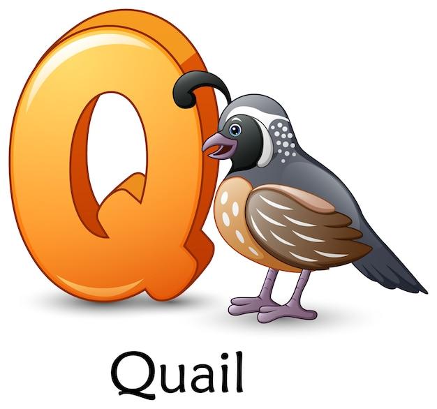 Letter q is for quail bird cartoon alphabet