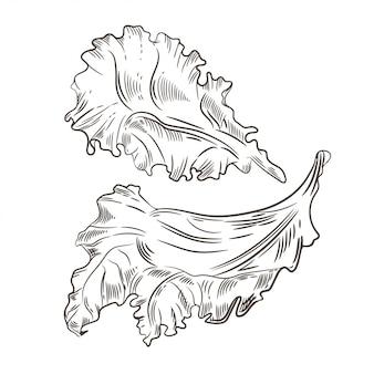 Листья салата. зарисовка графики. гравировка.