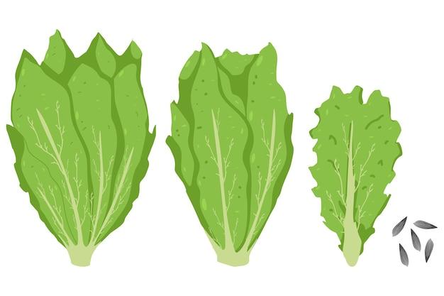 Листья салата и салат мультяшный набор