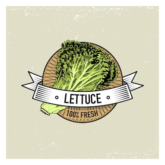 Lettuce vintage set of labels, emblems or logo for vegeterian food, vegetables hand drawn or engraved. retro farm american style.