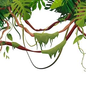 Liana와 덩굴은 열대 잎으로 가지를 감습니다. 정글 열대 등반 식물