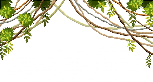 Liana branches and tropical leaves isolated