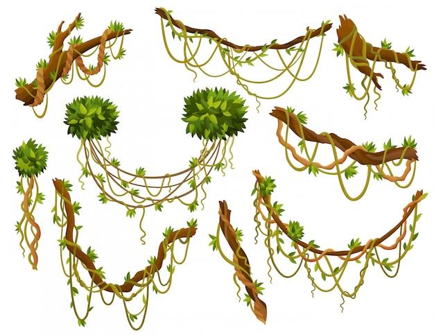 Лиана или джунгли, растение или лоза, дикая зелень, извилистые ветви, стебель с листьями, изолированные декоративные элементы, тропические лозы, флора тропических лесов и экзотическая ботаника, дикие керлинговые виды и веточки.