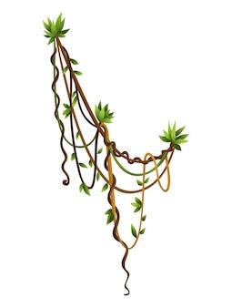 リアナまたはジャングルの野生のツルの曲がりくねった枝