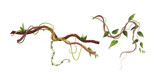 Лиана или виноградная лоза, вьющиеся ветви, иллюстрации шаржа