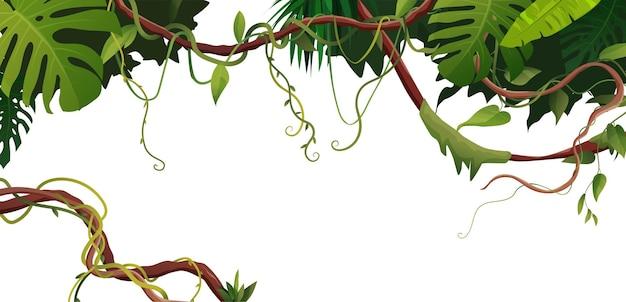 Liana 또는 트로픽 잎 배경으로 포도 나무 와인딩 지점. 정글 열대 등반 식물.