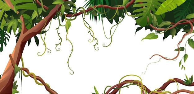 열대 잎이 달린 liana 또는 포도 나무 감기 가지