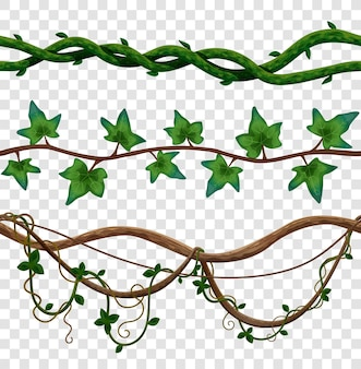 Liana seamless border set of vine leaves on wooden stalks on transparent