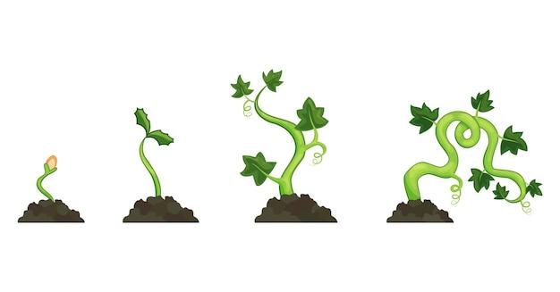 흰색 바탕에 성장 호박 식물의 수명주기. 씨앗에서 새싹까지 심는 과정. 평면 디자인.