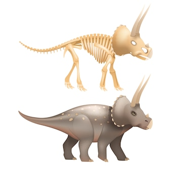 Life triceratops dinosaur with skeleton in prehistoric times art