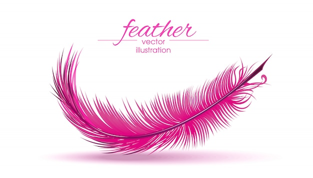 Light pink feather isolated on white background.