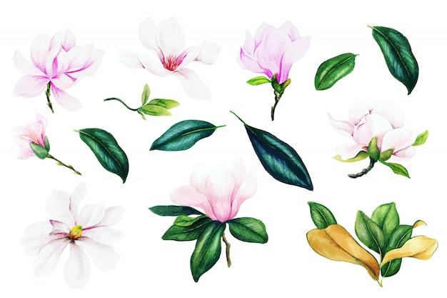 Светло-розовые цветы и листья магнолии, коллекция акварелей