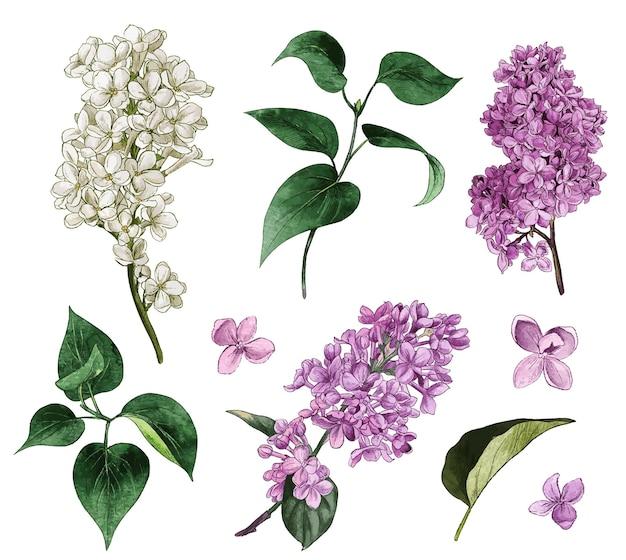 라일락 세트 수채화 라일락 꽃과 잎