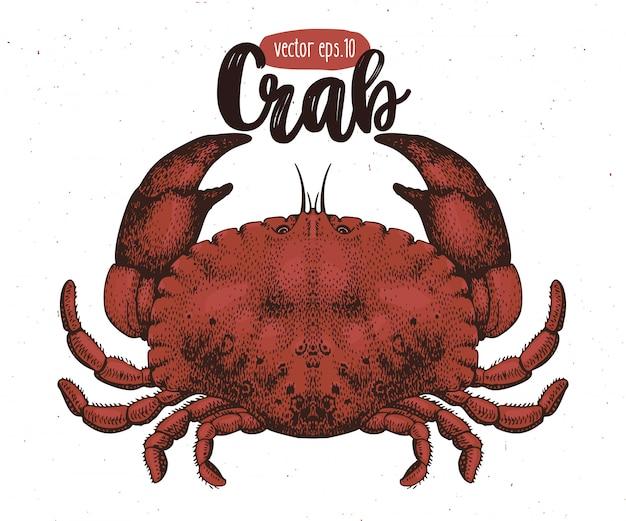 Векторная иллюстрация морепродуктов. краб старинный lillustration. рука рисунок эскиз омар.