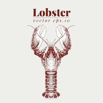 Векторная иллюстрация морепродуктов. лобстер винтажный lillustration. рука рисунок эскиз омар.