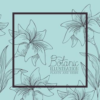 ユリの花の装飾的な正方形のフレーム