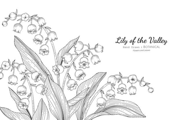 スズランの花と葉の手描きの植物画と線画。