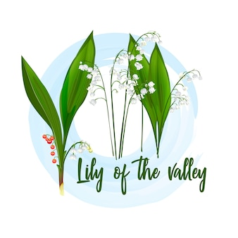 Lily of the valley-seeded plant.