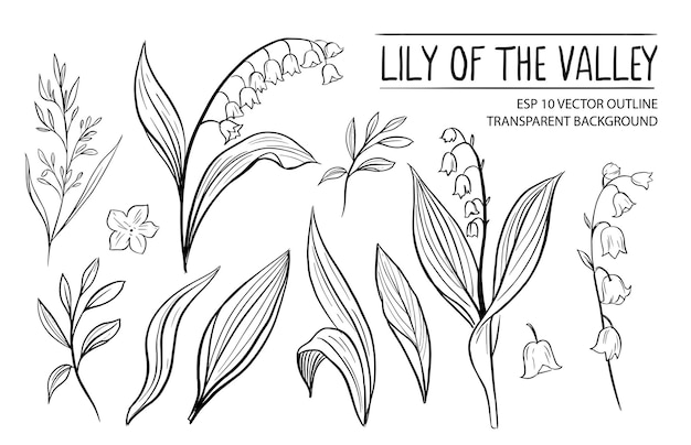 Lily of the vally. hand drawn illustration isolated on white
