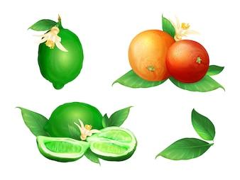 Lime and orange illustration of citrus fruit botanical blossom and leaf.