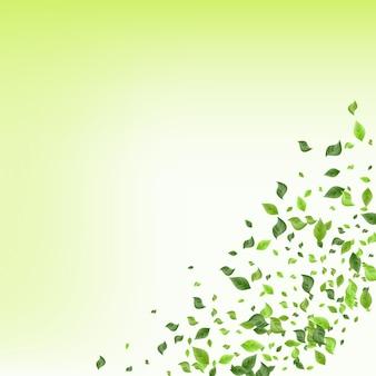 ライムの葉自然ベクトル緑の背景の概念。茶葉の壁紙。森の葉の木のポスター。緑の渦巻き模様。
