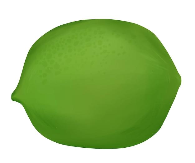 Lime green citrus fruit