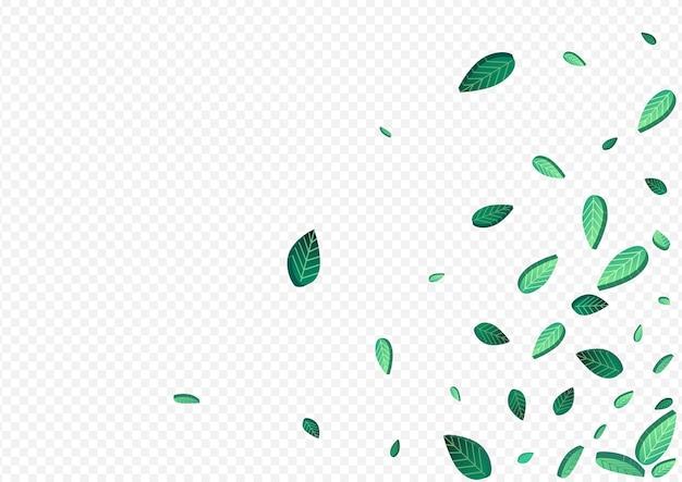 Лаймовая зелень, летающая векторная иллюстрация на прозрачном фоне. прозрачный фон листья. травянистая листва свежий плакат. листопад шаблон.