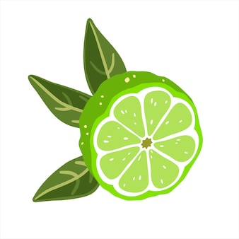 Lime half with leaves on a white background. vector illustration