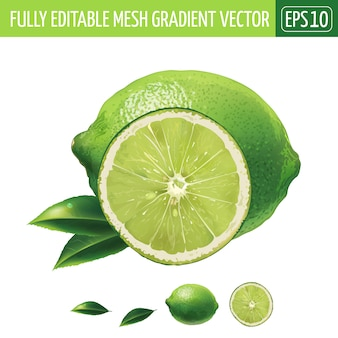 Lime illustration on white