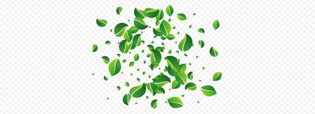 Lime leaves motion vector panoramic transparent background. tree foliage branch. mint greens ecology border. leaf swirl illustration.
