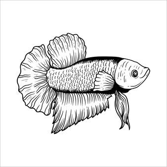 Line art betta fish hand drawn premium vector plakat style