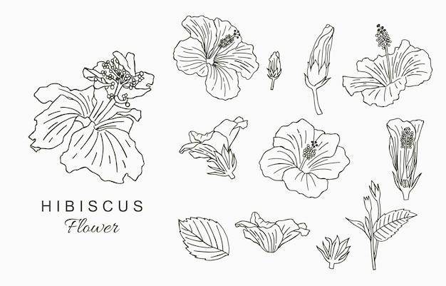 히비스커스와 라인 아트 꽃 컬렉션. 프리미엄 벡터