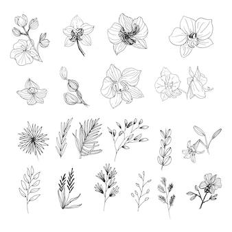 라인 아트 손으로 그린 꽃과 잎 컬렉션