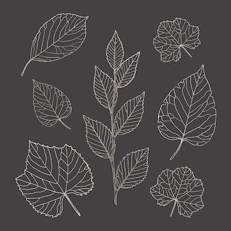 Line art leaves. botanical decorative set of leaves from trees