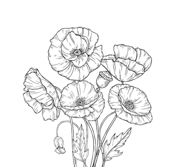Line art poppies flower sketch drawing wall artwork decorative plant