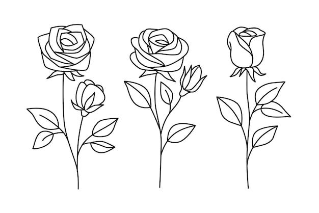 葉と線画のバラ。