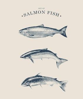ヴィンテージスタイルのサーモン魚イラストのラインアートセット