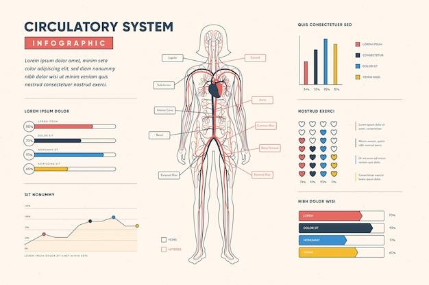 線形循環システムのインフォグラフィック