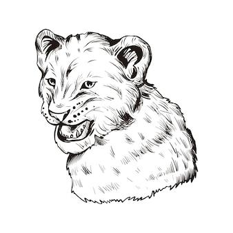 Лев животное ребенок, портрет экзотических животных изолированных эскиз. рисованной иллюстрации.