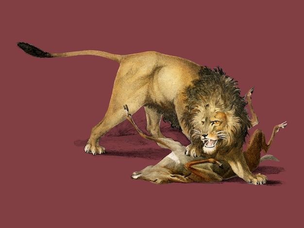 Лев ест оленя