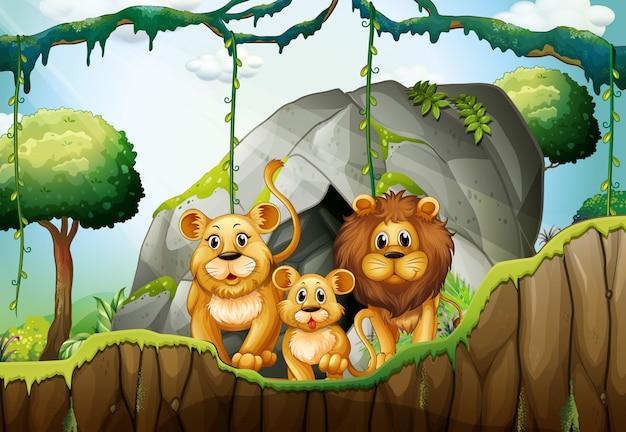 ジャングルに住むライオン家族