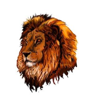 水彩のスプラッシュからライオンの頭の肖像画