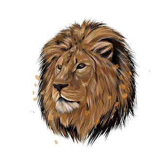 Lion head portrait from a splash of watercolor