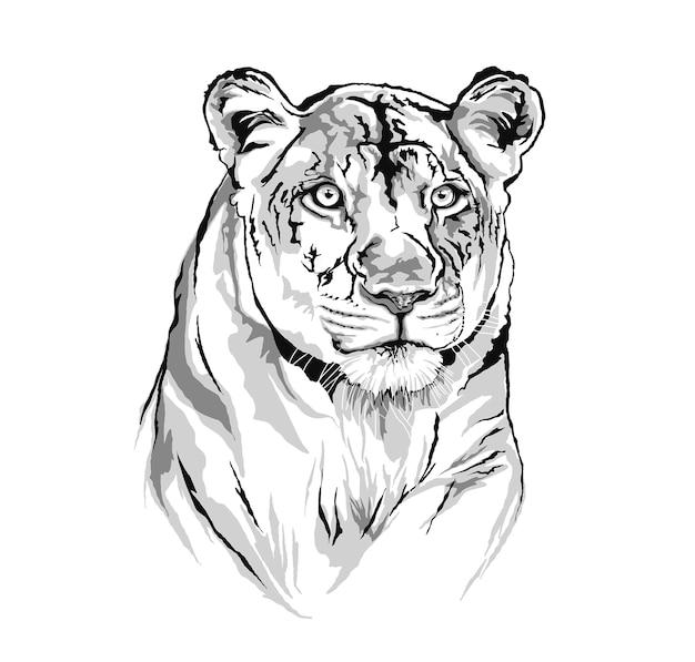 Иллюстрация льва