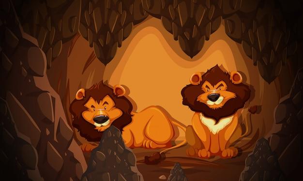 洞窟に住むライオン