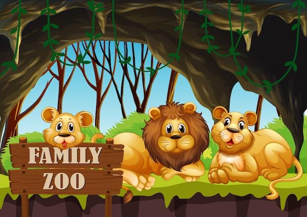 動物園に住むライオン