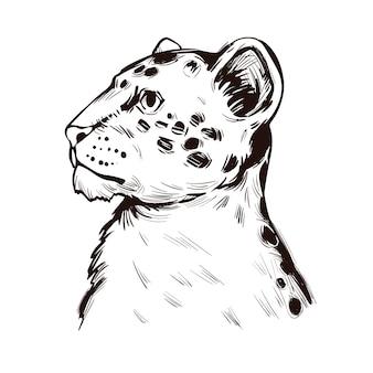 Лев тигр гибрид потомство льва и тигра, портрет экзотических животных изолированных эскиз. рисованной иллюстрации.